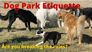 Proper-Dog-Park-Etiquette