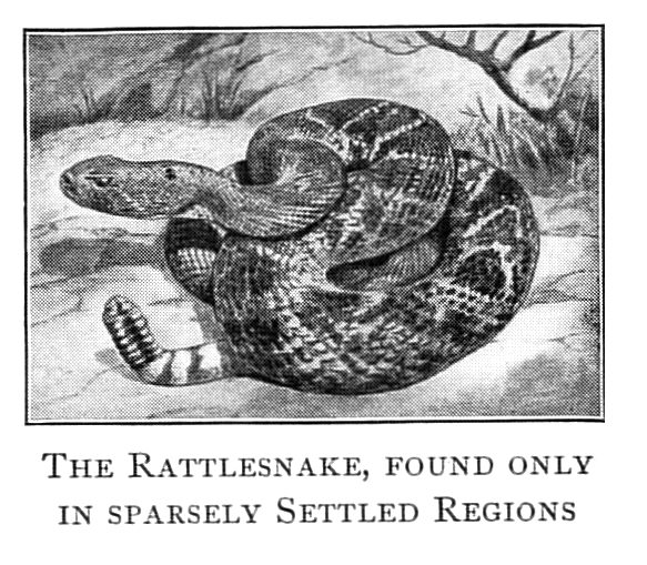 rattlerpic