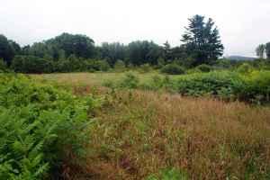 overgrown-field